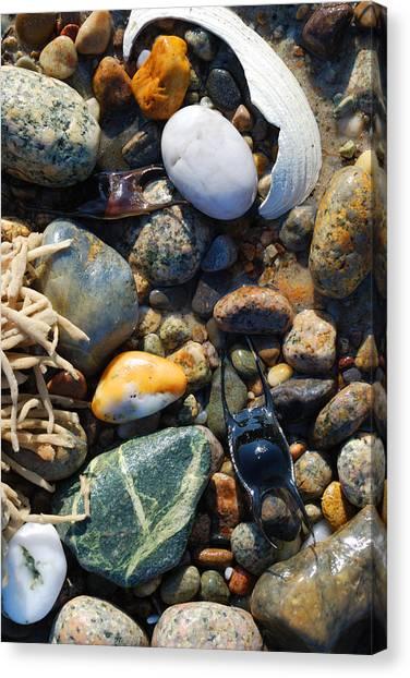 Rocks And Shells On Sandy Neck Beach Canvas Print