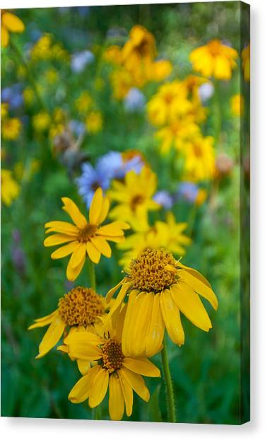 Rocky Mountain Wildflowers Canvas Print