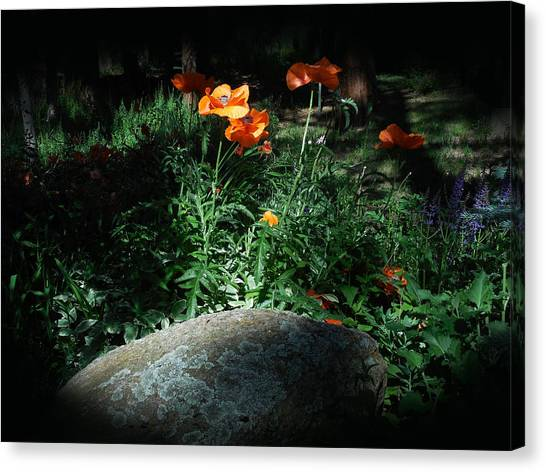 Rocky Mt. Poppies  Canvas Print