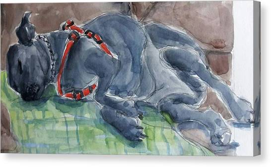 Rocky Napping Canvas Print by Janet Butler