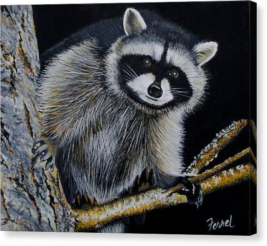 Rocky Raccoon Canvas Print