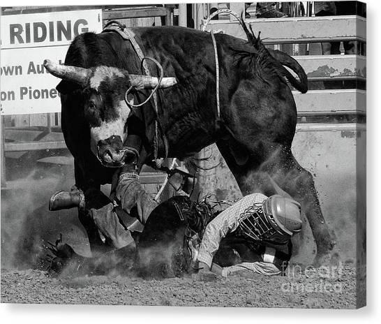 Bull Riding Canvas Print - Rodeo Stars 8 by Bob Christopher