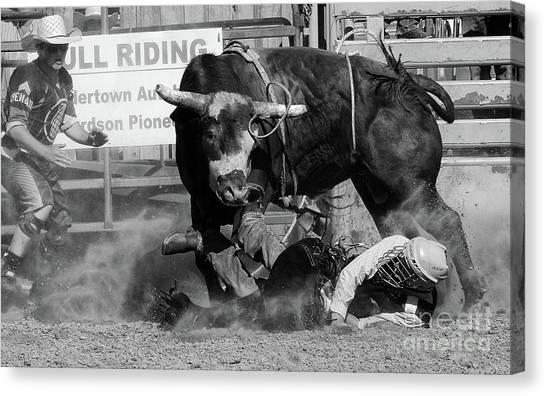Bull Riding Canvas Print - Rodeo Stars 9 by Bob Christopher