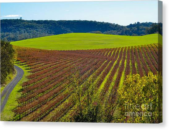 Rolling Hills And Vineyards Canvas Print