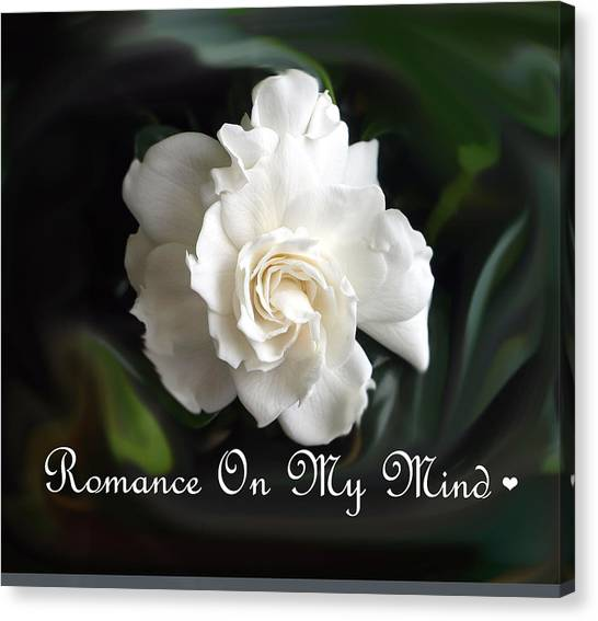 Romance Rose Canvas Print by Kim