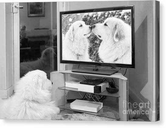 Romantic Dogs Canvas Print