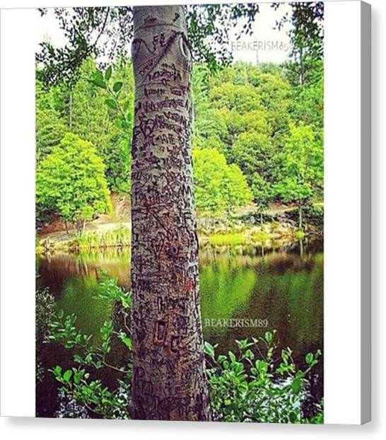 Lovebirds Canvas Print - #romantic #tree #bark #treecarving by Jose Carmona