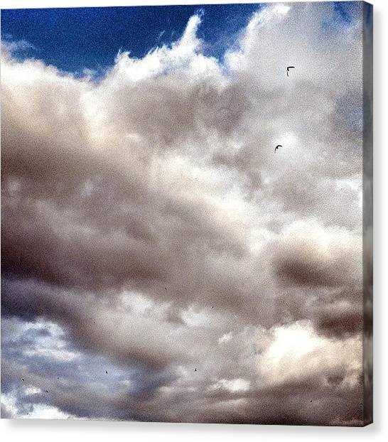 Swallows Canvas Print - #rondini #swallows #birds #birdwatching by Michele Stuppiello