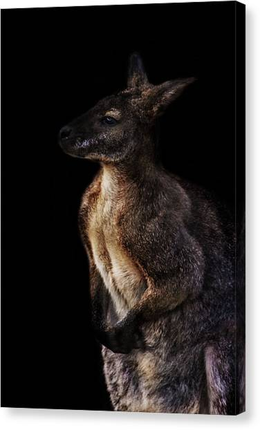Emus Canvas Print - Roo by Martin Newman
