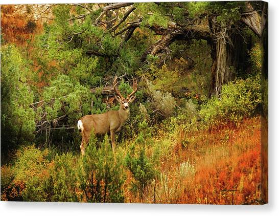 Roosevelt Deer Canvas Print