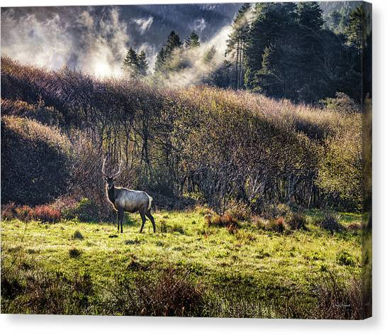 Canvas Print featuring the photograph Roosevelt Elk by Leland D Howard