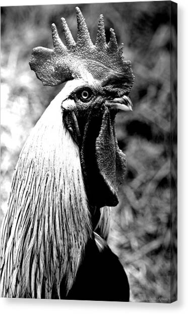 Black and white rooster canvas print rooster black and white by elizabeth abbott