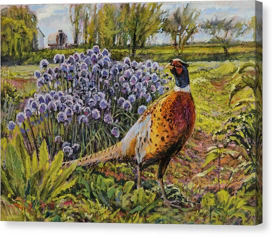 Rooster Pheasant In The Garden Canvas Print