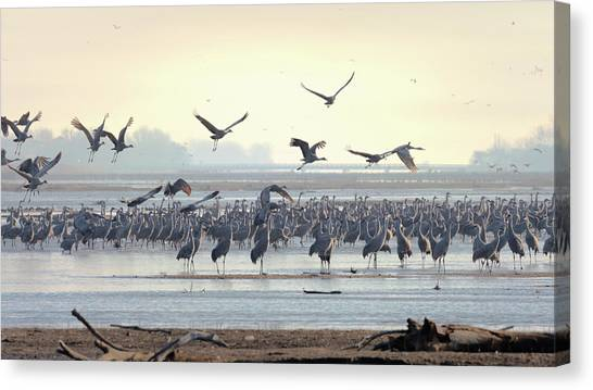 Roosting On The Platte Canvas Print