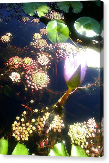 Root Of Beauty Canvas Print by Scarlett Royal