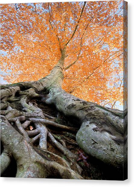 Clemson University Canvas Print - Root Of The Matter by Mary Sparrow