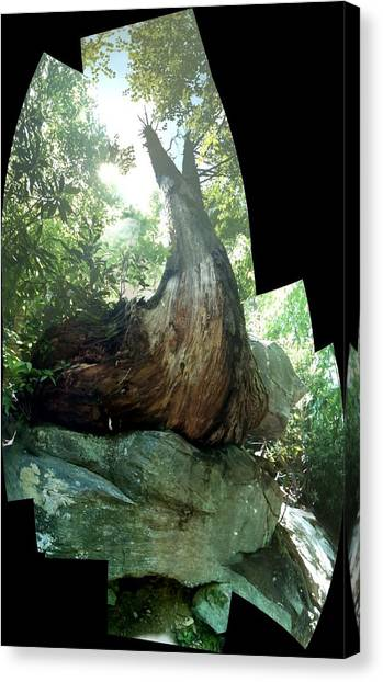 Root Over Rock Canvas Print