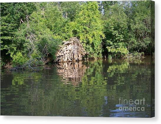 Roots In The Stream Canvas Print by Deborah MacQuarrie-Selib