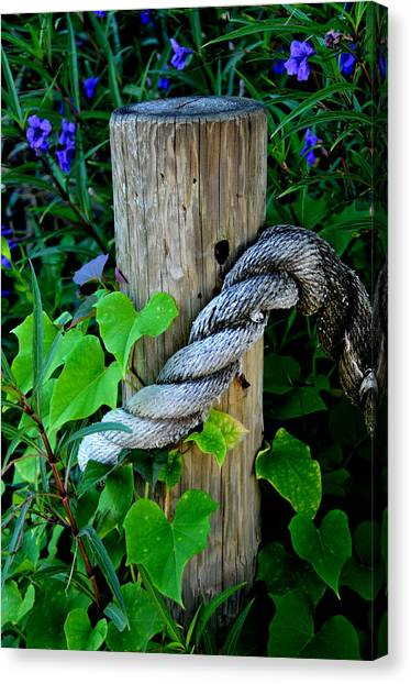 Rope And Vine Canvas Print by Lyle  Huisken