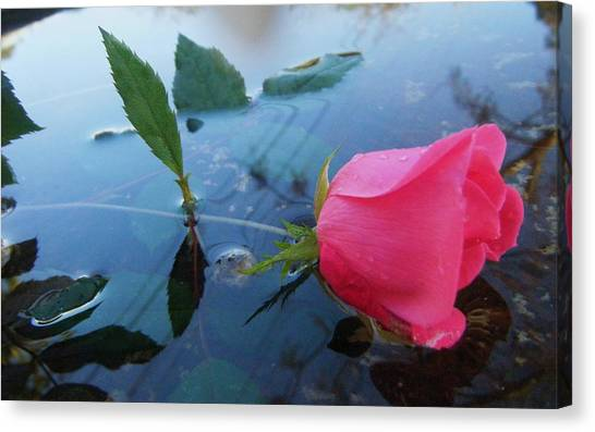 Rose And Water. Canvas Print by Nereida Slesarchik Cedeno Wilcoxon