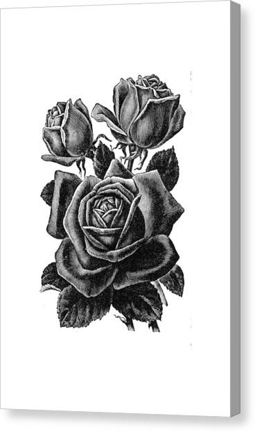 Canvas Print featuring the digital art Rose Black by ReInVintaged