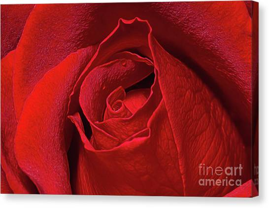 Canvas Print featuring the photograph Rose Bud by Ray Shiu