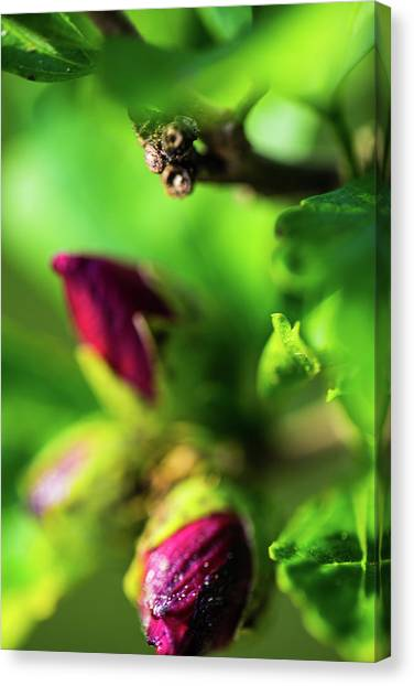 Rose Buds Body Guard Canvas Print