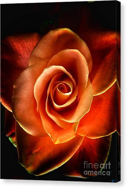 Canvas Print featuring the photograph Rose by Donald Paczynski