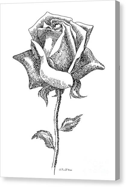 Rose Drawings Black-white 5 Canvas Print
