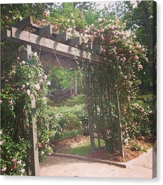 Arbor Canvas Print - Rose Garden #roses #arbor #beautiful by Cassandra Eilidh