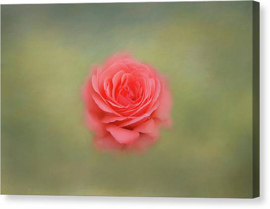 Canvas Print featuring the photograph Rose Impressions by Kim Hojnacki