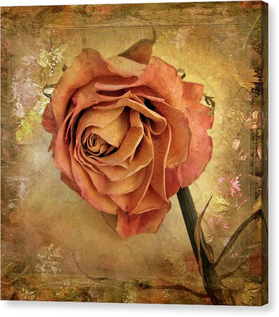 Rose Canvas Print - Rose  by Jessica Jenney