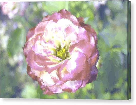 Rose Canvas Print by Maria Freeman