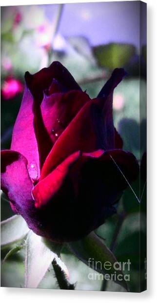 Rose Of Love Canvas Print