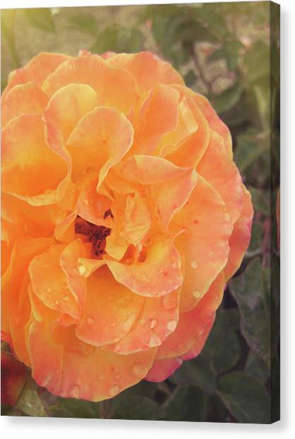 Rose Of Seville Canvas Print by JAMART Photography