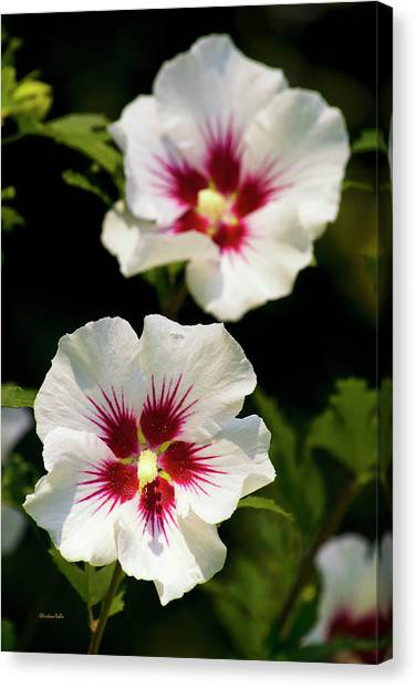 Althea Canvas Print - Rose Of Sharon by Christina Rollo