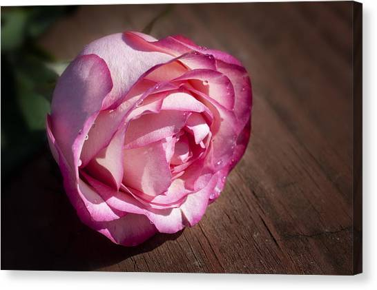 Rose On Wood Canvas Print