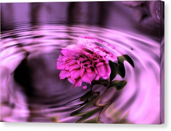 Rose Pool Canvas Print
