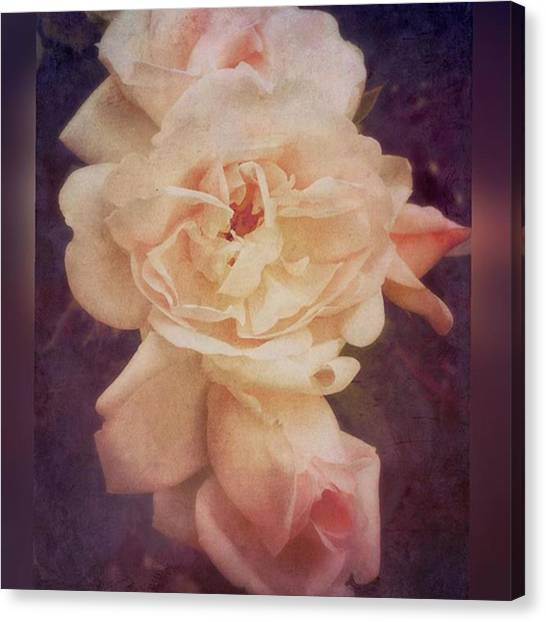 Roses Canvas Print - Rose #stackablesapp #roses #enlight by Joan McCool