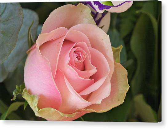 Rose Canvas Print by Theo Tan