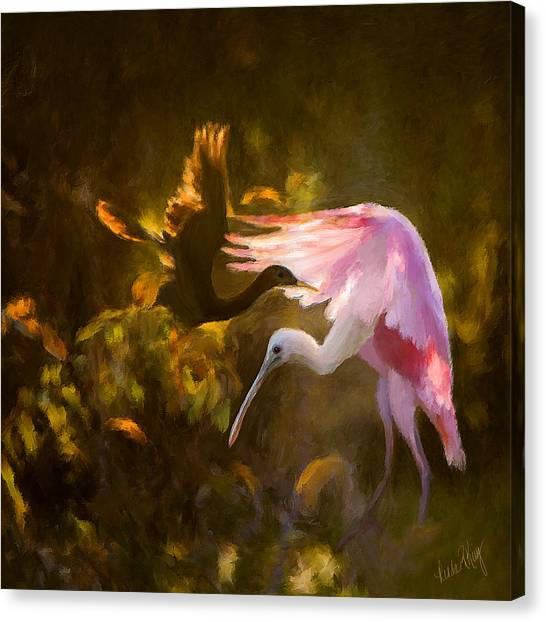 Linda King Canvas Print - Roseate Spoonbill 0559 by Linda King