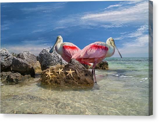 Spoonbills Canvas Print - Roseate Spoonbill Florida Keys by Betsy Knapp