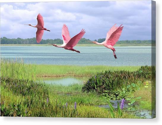 Roseate Spoonbills Of Florida Bay Canvas Print