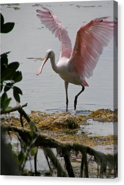Spoonbills Canvas Print - Roseate Wave by Kimberly Mohlenhoff