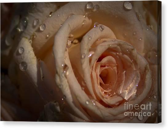 Rosebud Canvas Print by Marta Grabska