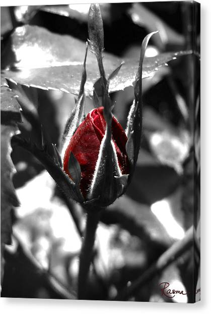 Rosebud Red Canvas Print