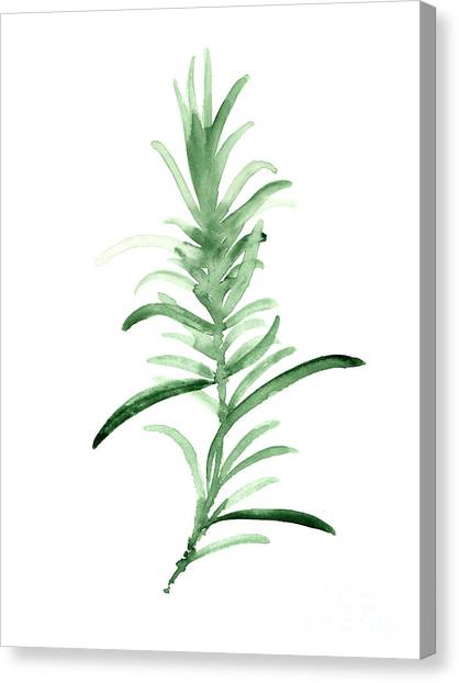 Birthday Canvas Print - Rosemary Green Watercolor Foodart by Joanna Szmerdt