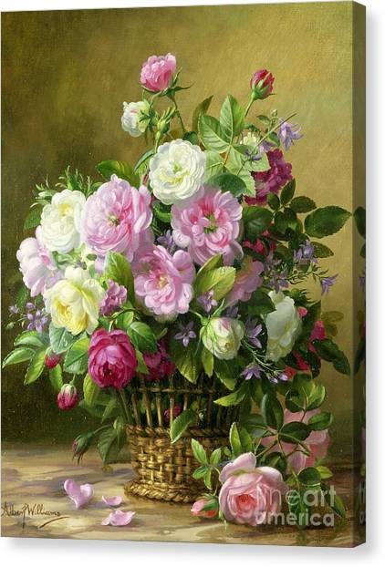 Rose In Bloom Canvas Print - Roses  by Albert Williams