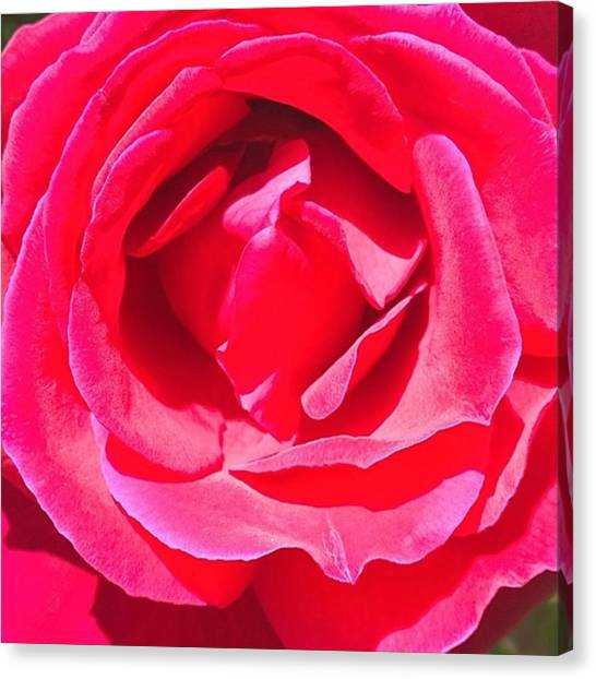 Red Canvas Print - #roses Are #red ...#violets Are #blue by Shari Warren