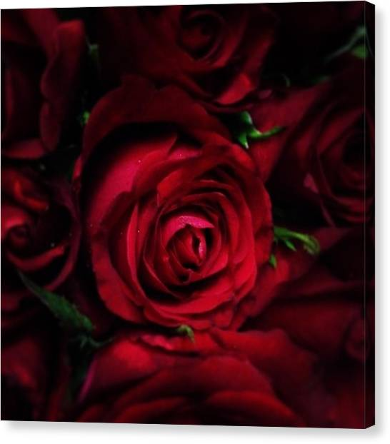 Red Roses Canvas Print - Roses by Khushboo N